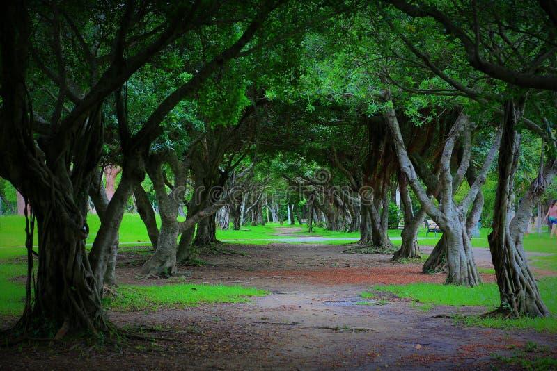 Estrada alinhada árvore em um parque imagens de stock royalty free
