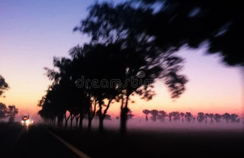 Estrada alinhada árvore no alvorecer foto de stock royalty free