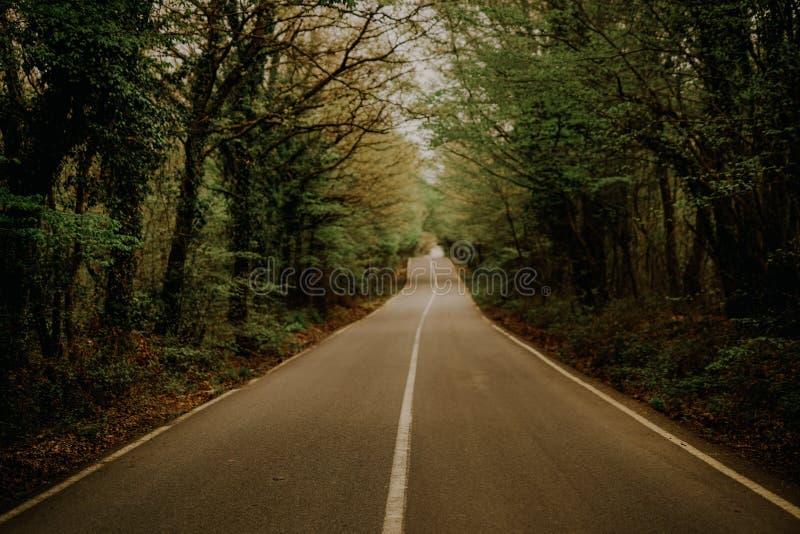 Estrada alinhada com árvores foto de stock