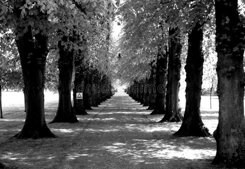 Estrada alinhada com árvores imagens de stock royalty free