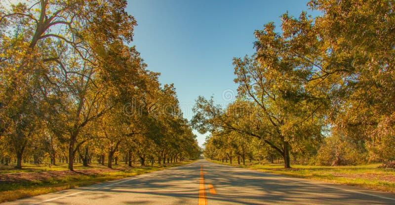 Estrada alinhada da árvore de noz-pecã em Geórgia fotografia de stock royalty free