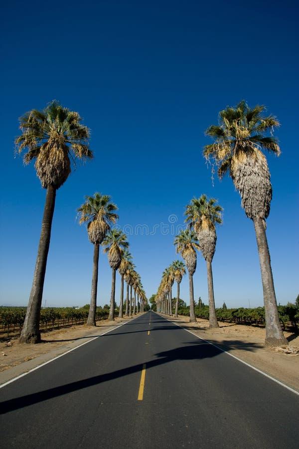 Estrada alinhada nas palmeiras foto de stock royalty free