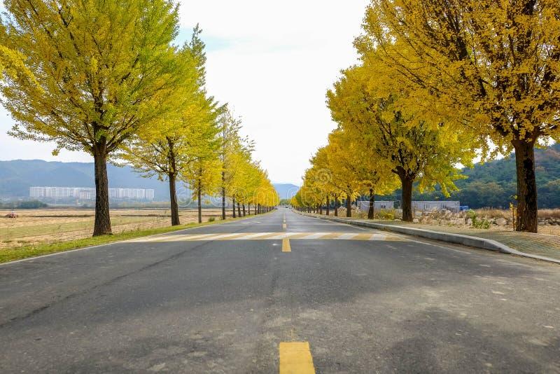 Estrada amarela no outono imagens de stock royalty free