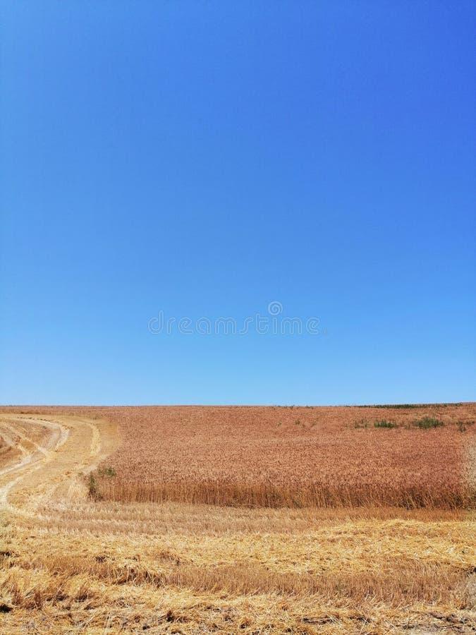 Estrada ao campo e ao céu de trigo imagens de stock