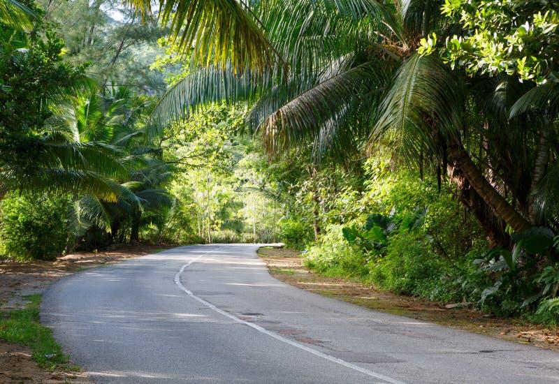 A estrada asfaltada através da floresta tropical tropical, ilha de Praslin; Seychelles imagem de stock