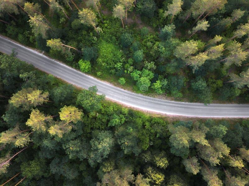 A estrada asfaltada através da floresta Vista aérea do zangão no por do sol no verão imagens de stock royalty free