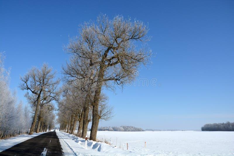 Estrada asfaltada do inverno com a aleia e a geada velhas da árvore fotos de stock