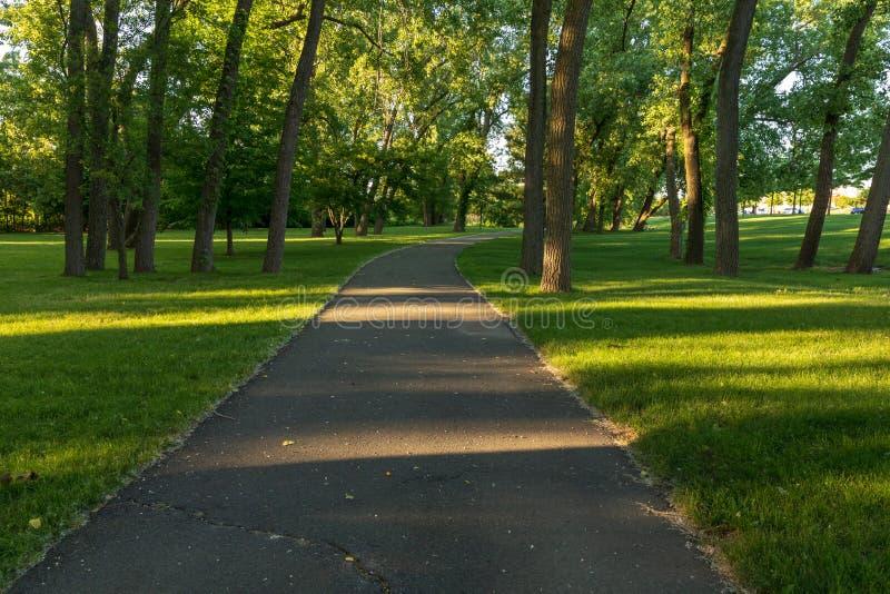 Estrada asfaltada na floresta verde fotos de stock royalty free
