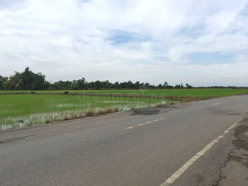 Estrada asfaltada no país Chachoengsao Tailândia fotos de stock