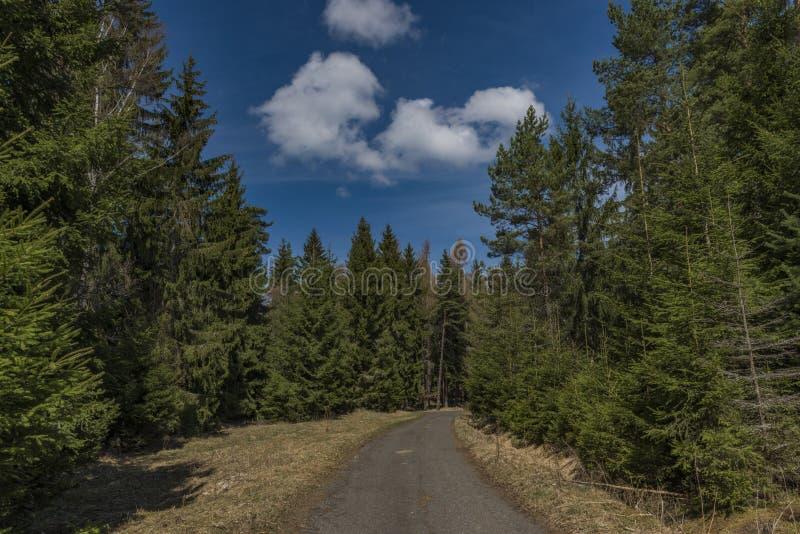 A estrada asfaltada perto dos prados e da terra de pasto no dia de mola fotografia de stock royalty free
