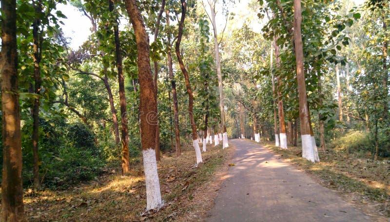 Estrada até ao meio da floresta protegida imagem de stock