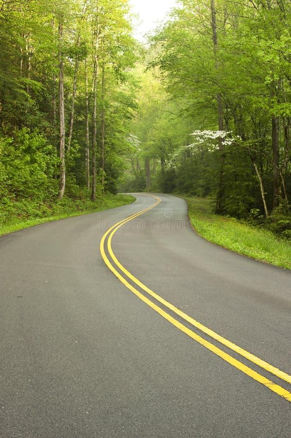 Estrada através da floresta. imagens de stock