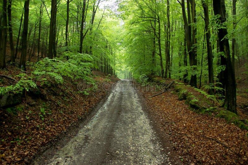 Estrada através da floresta fotografia de stock