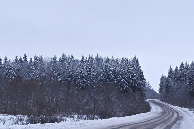 A estrada através da floresta fotos de stock royalty free