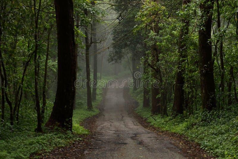 Estrada através da floresta com névoa imagem de stock royalty free