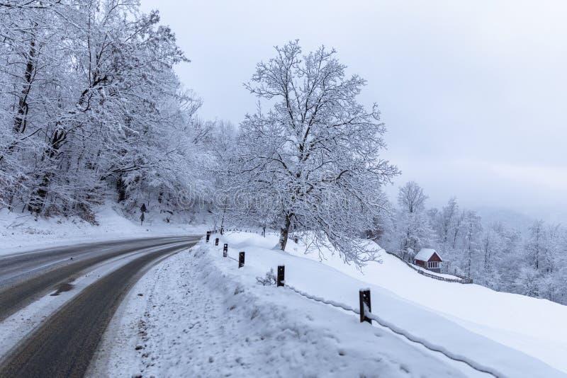 A estrada através da floresta entre árvores cobertos de neve fotografia de stock royalty free