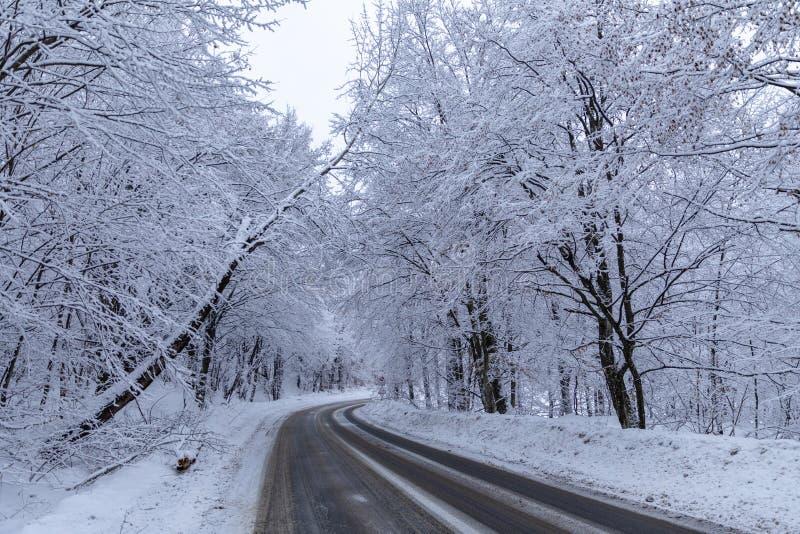 A estrada através da floresta entre árvores cobertos de neve fotos de stock royalty free
