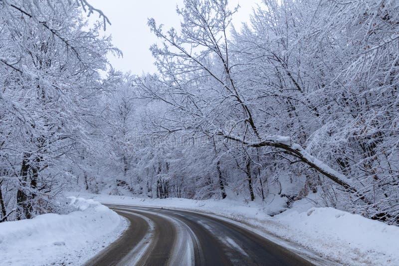 A estrada através da floresta entre árvores cobertos de neve imagem de stock royalty free