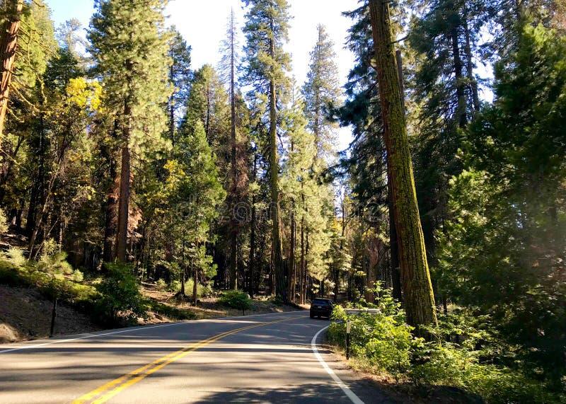 Estrada através da floresta no parque nacional de Yosemite fotos de stock
