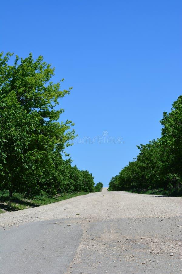 Estrada através das árvores foto de stock