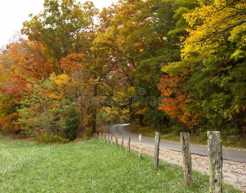 Estrada através das árvores da queda imagem de stock