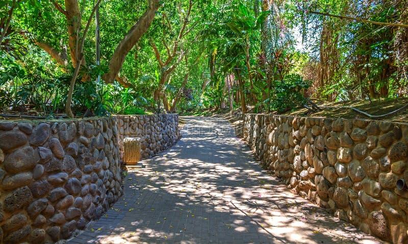 Estrada através de um parque com árvores tropicais imagem de stock