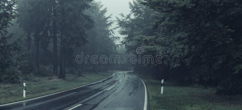 Estrada através de uma floresta fotos de stock royalty free