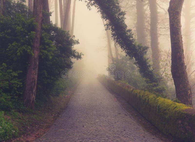 Estrada através de uma floresta dourada com névoa foto de stock