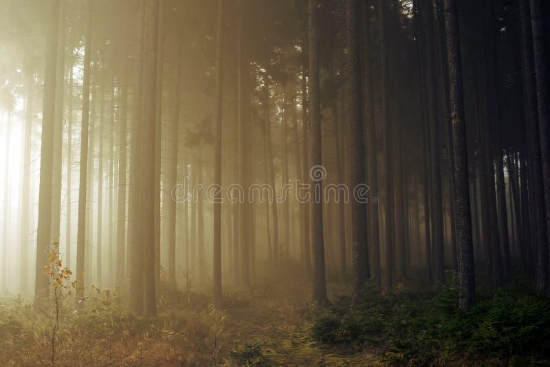 Estrada através de uma floresta dourada com névoa e luz morna fotos de stock