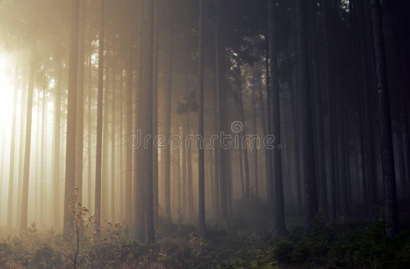 Estrada através de uma floresta dourada com névoa e luz morna imagens de stock