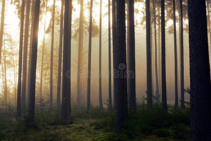 Estrada através de uma floresta dourada com névoa e luz morna fotografia de stock