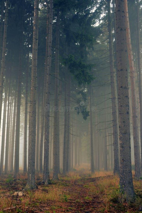 Estrada através de uma floresta dourada com névoa e luz morna fotos de stock royalty free