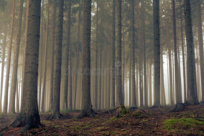 Estrada através de uma floresta dourada com névoa e luz morna imagens de stock royalty free