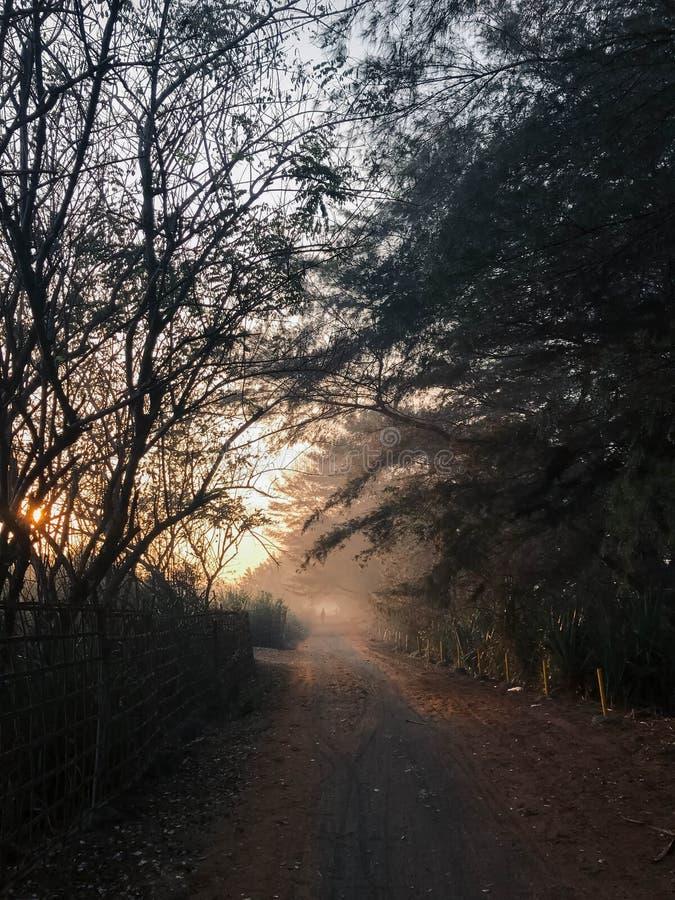 Estrada através de uma floresta dourada com névoa e luz morna Yogyakarta 5 de outubro de 2018 fotografia de stock