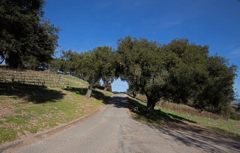 Estrada através do carvalho de Califórnia após vinhedos da uva de Riesling nos EUA imagens de stock royalty free