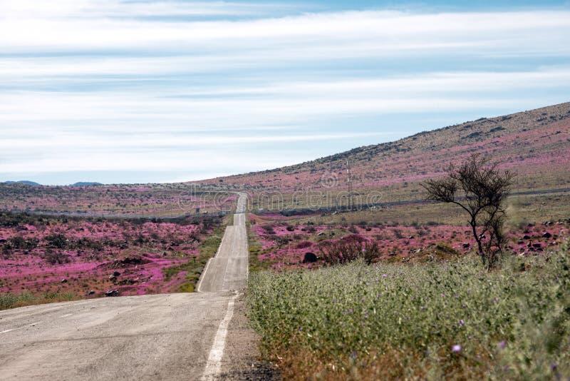 Estrada através do deserto de florescência Atacama fotos de stock