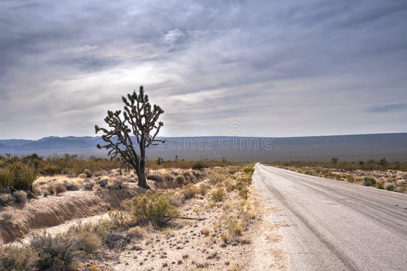 Estrada através do deserto de Mojave, Califórnia fotografia de stock