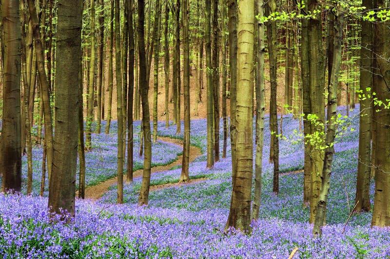Estrada através dos azuis imagem de stock