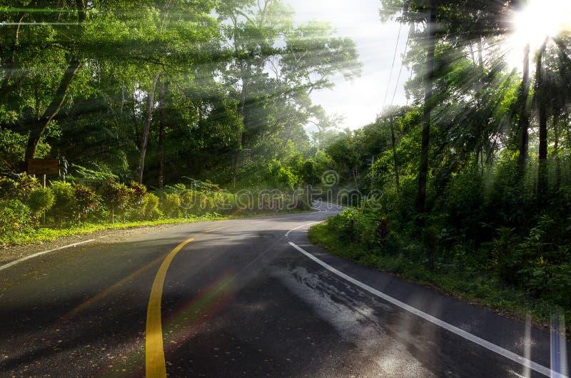 Estrada bonita através da floresta com configuração da luz fotografia de stock