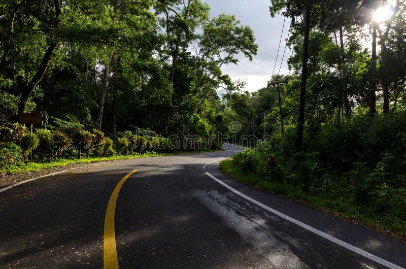 Estrada bonita através da floresta com configuração da luz imagem de stock
