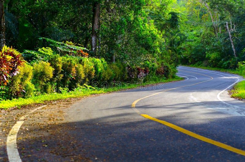 Estrada bonita através da floresta com configuração da luz foto de stock royalty free