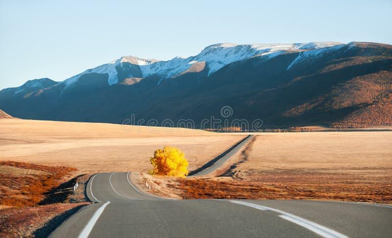 Estrada bonita com a árvore amarela nas montanhas do outono Altai, Sibéria, Rússia imagens de stock