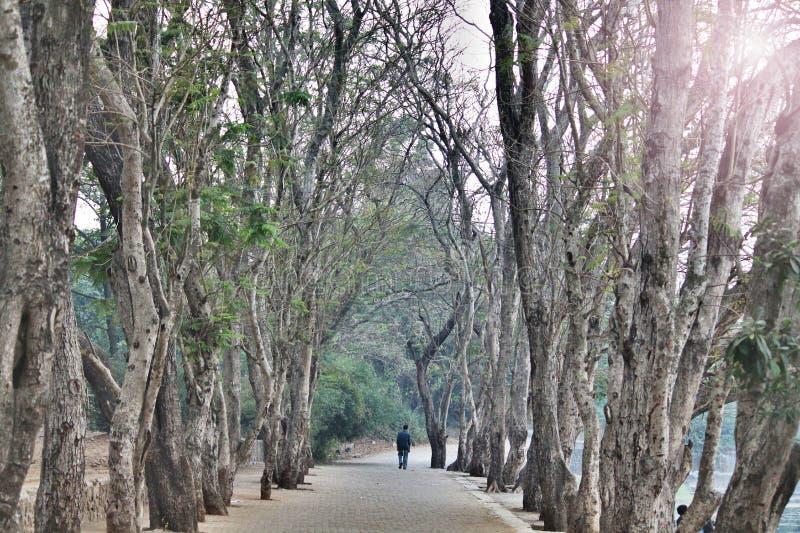Estrada bonita da árvore fotos de stock royalty free