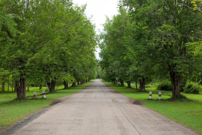 Estrada bonita da paisagem na floresta imagens de stock royalty free