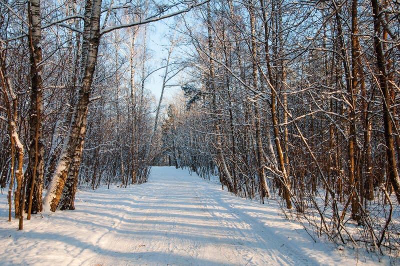 Estrada bonita na floresta do inverno em uma tarde ensolarada no inverno foto de stock royalty free