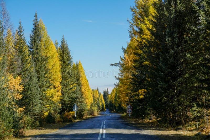 Estrada bonita na floresta, outono fotografia de stock
