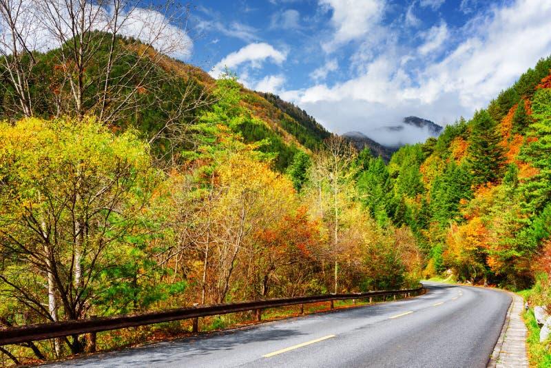 Estrada cênico entre madeiras coloridas da queda Autumn Landscape imagem de stock royalty free