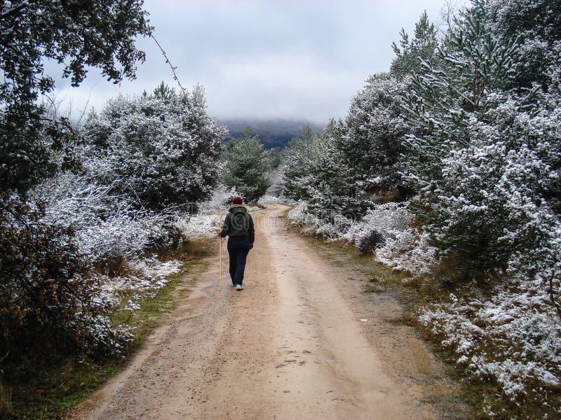 Estrada c?nico do inverno atrav?s da floresta coberta na neve ap?s a queda de neve Moncayo, Espanha fotografia de stock royalty free