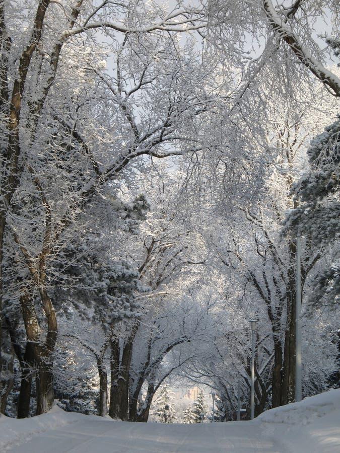 Estrada coberta com a neve foto de stock royalty free
