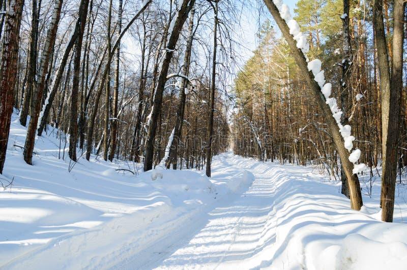 Estrada coberto de neve através da floresta ensolarada do inverno fotos de stock royalty free